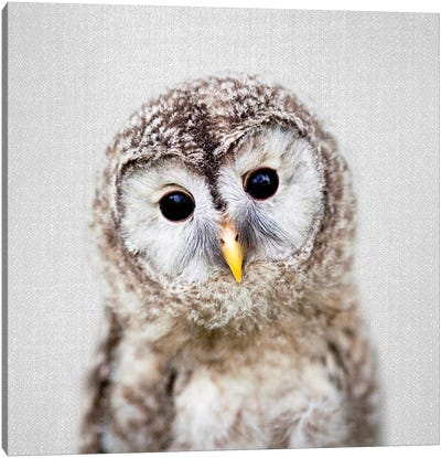 Baby Owl Canvas Art Print