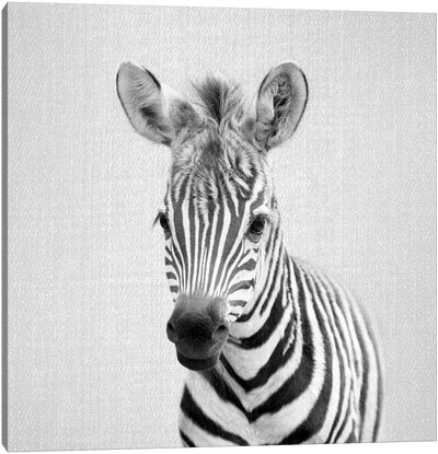 Baby Zebra In Black & White Canvas Art Print