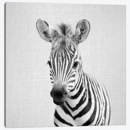 Baby Zebra In Black & White Canvas Print #GAD11} by Gal Design Canvas Print