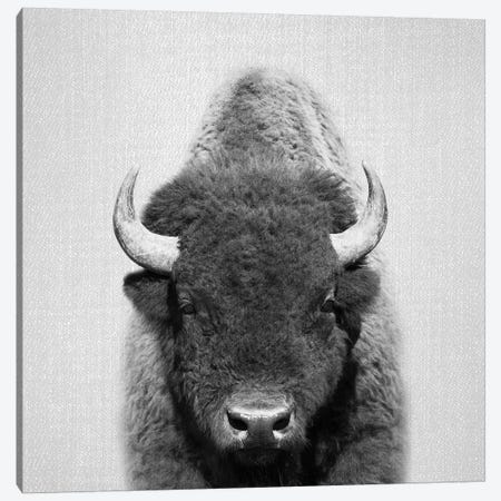 Buffalo In Black & White Canvas Print #GAD14} by Gal Design Canvas Artwork