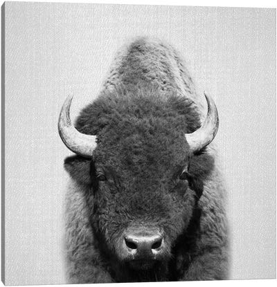 Buffalo In Black & White Canvas Art Print
