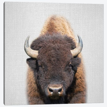 Buffalo Canvas Print #GAD15} by Gal Design Canvas Artwork