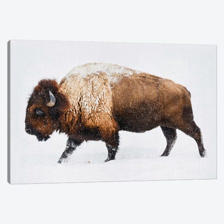 Buffalo In The Snow Canvas Print #GAD16} by Gal Design Canvas Art