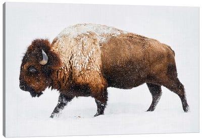Buffalo In The Snow Canvas Art Print
