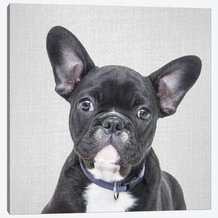 Bulldog Puppy Canvas Print #GAD17} by Gal Design Canvas Art
