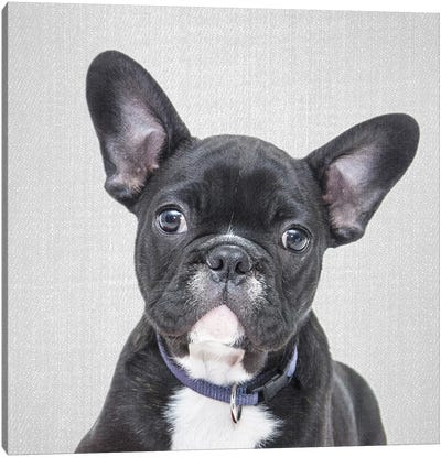 Bulldog Puppy Canvas Art Print