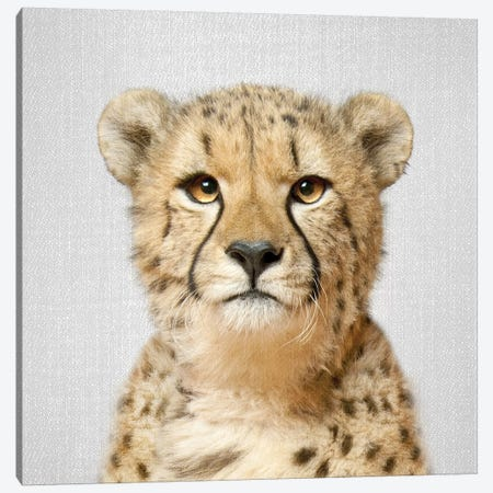 Cheetah Canvas Print #GAD18} by Gal Design Canvas Art Print