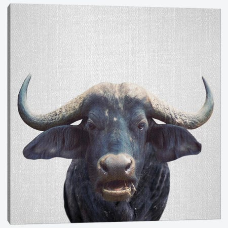 African Buffalo Canvas Print #GAD1} by Gal Design Canvas Art Print