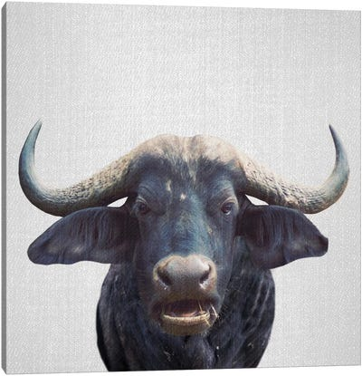 African Buffalo Canvas Art Print