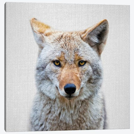 Coyote Canvas Print #GAD21} by Gal Design Canvas Wall Art