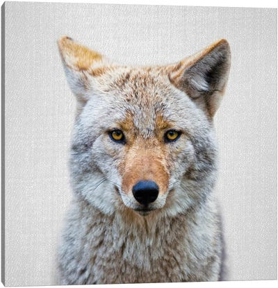 Coyote Canvas Art Print