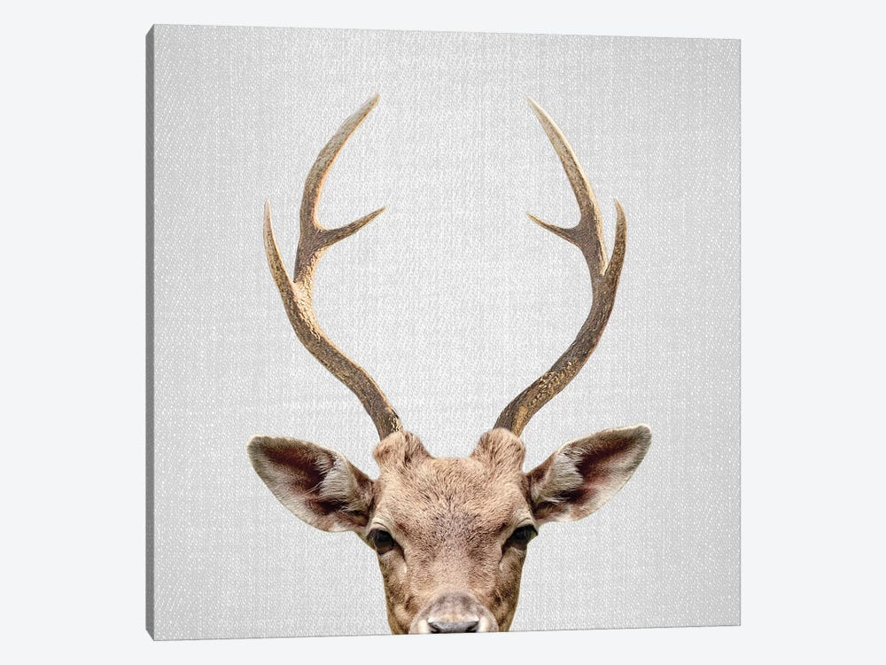 Deer by Gal Design 1-piece Canvas Artwork