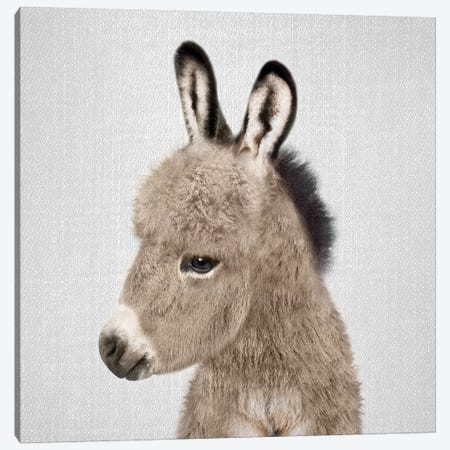 Donkey Canvas Print #GAD23} by Gal Design Canvas Artwork