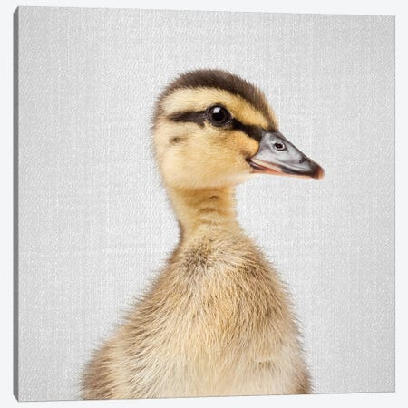 Duckling Canvas Print #GAD24} by Gal Design Canvas Print