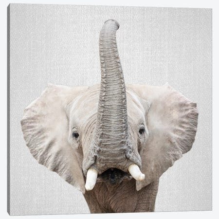 Elephant II Canvas Print #GAD27} by Gal Design Canvas Print