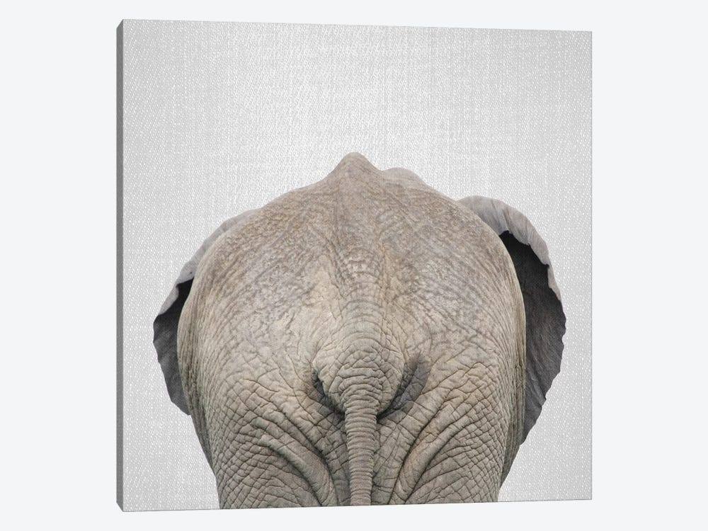 Elephant Tail by Gal Design 1-piece Canvas Artwork