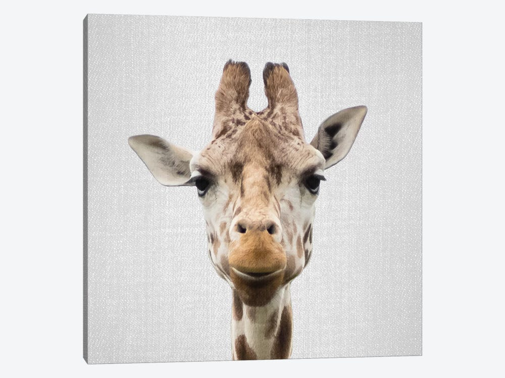 Giraffe I by Gal Design 1-piece Canvas Print