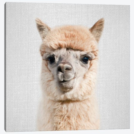 Alpaca Canvas Print #GAD2} by Gal Design Canvas Print