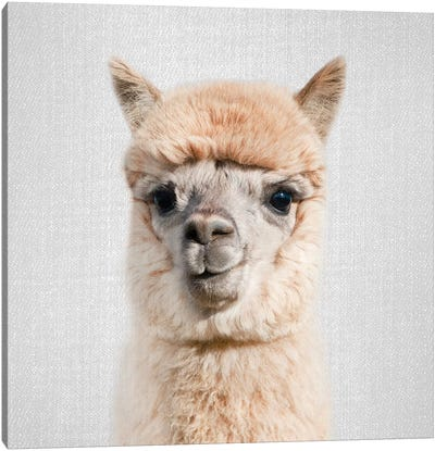 Alpaca Canvas Art Print