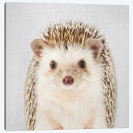Hedgehog Canvas Print #GAD31} by Gal Design Art Print