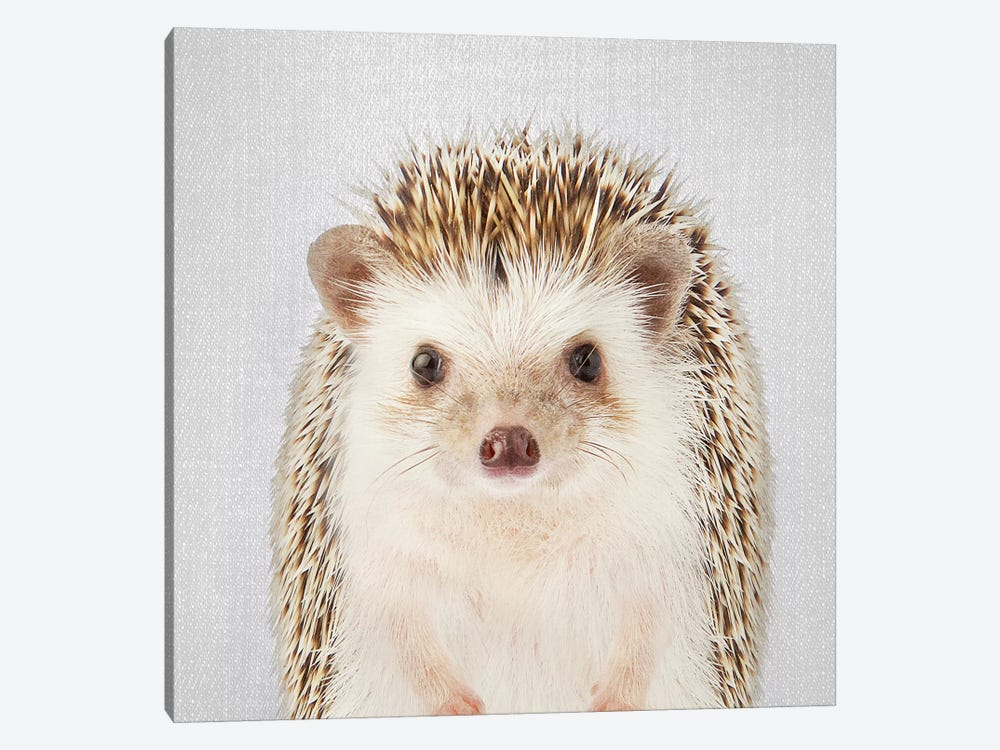 Hedgehog 1-piece Canvas Wall Art