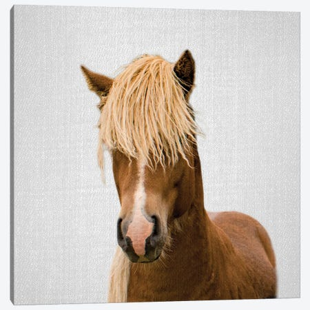Horse I Canvas Print #GAD32} by Gal Design Canvas Art Print