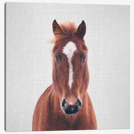 Horse II 3-Piece Canvas #GAD33} by Gal Design Canvas Art Print