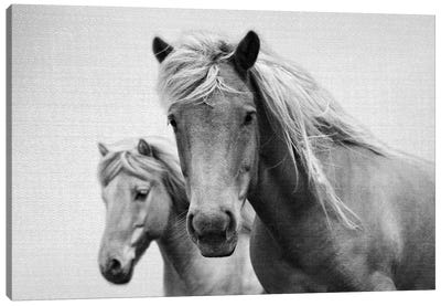 Horses In Black & White Canvas Art Print