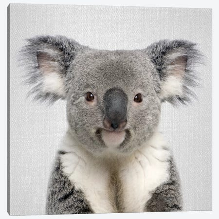 Koala Canvas Print #GAD36} by Gal Design Canvas Art