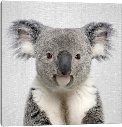 Koala Canvas Art Print
