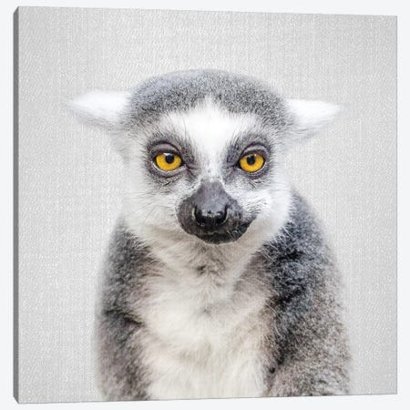 Lemur Canvas Print #GAD37} by Gal Design Canvas Wall Art