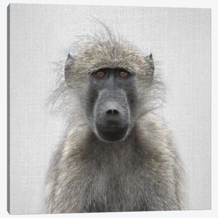 Baboon 3-Piece Canvas #GAD3} by Gal Design Canvas Print