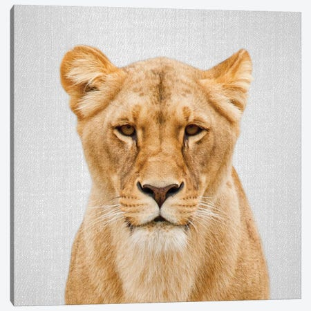 Lioness Canvas Print #GAD40} by Gal Design Canvas Artwork