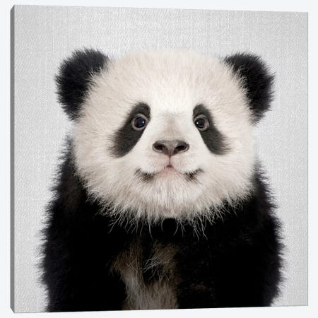 Panda Bear Canvas Print #GAD46} by Gal Design Canvas Art Print