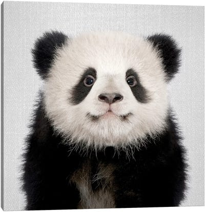 Panda Bear Canvas Art Print