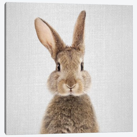 Rabbit 3-Piece Canvas #GAD50} by Gal Design Canvas Art Print