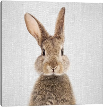 Rabbit Canvas Art Print