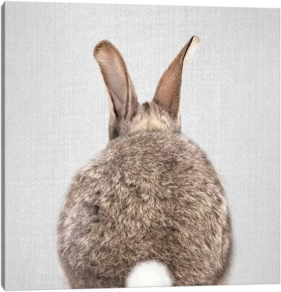 Rabbit Tail Canvas Art Print