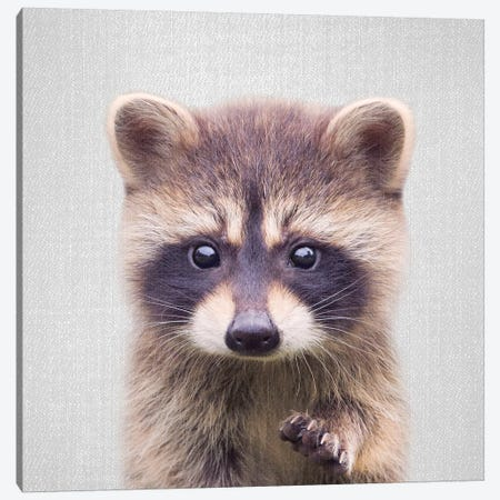 Raccoon 3-Piece Canvas #GAD52} by Gal Design Canvas Print