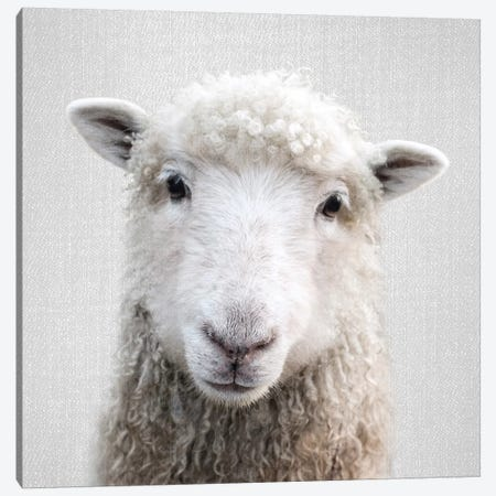 Sheep Canvas Print #GAD54} by Gal Design Canvas Art