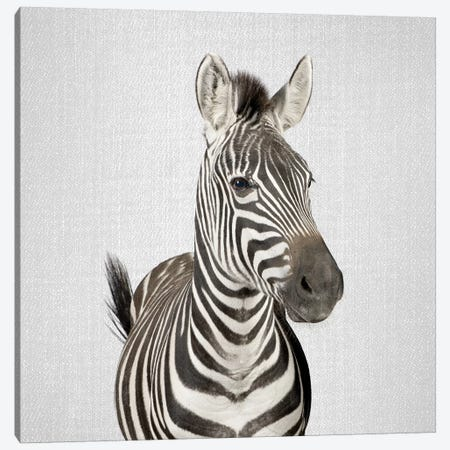 Zebra II Canvas Print #GAD58} by Gal Design Art Print
