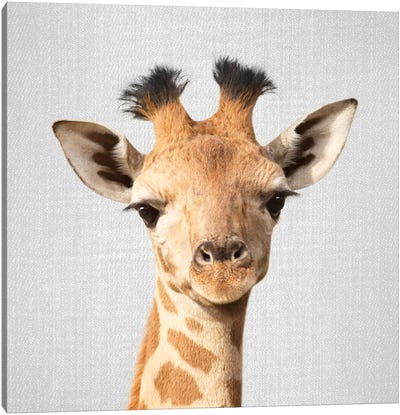 Baby Giraffe Canvas Art Print