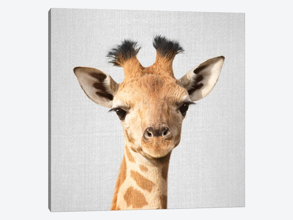 Baby Giraffe by Gal Design 1-piece Canvas Wall Art