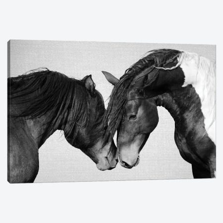 Horses In Black & White II Canvas Print #GAD70} by Gal Design Canvas Print