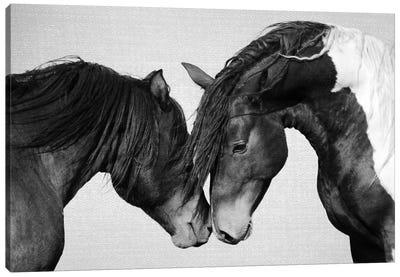 Horses In Black & White II Canvas Art Print