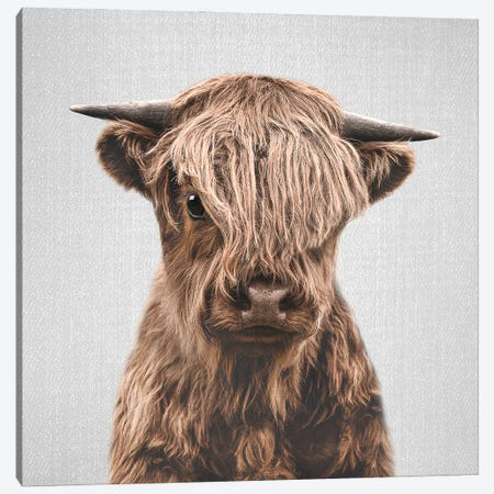 Highland Calf Canvas Print #GAD74} by Gal Design Canvas Art