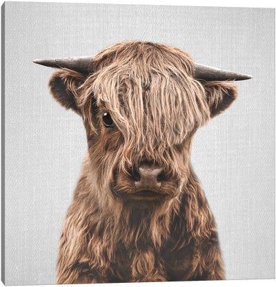 Highland Calf Canvas Art Print