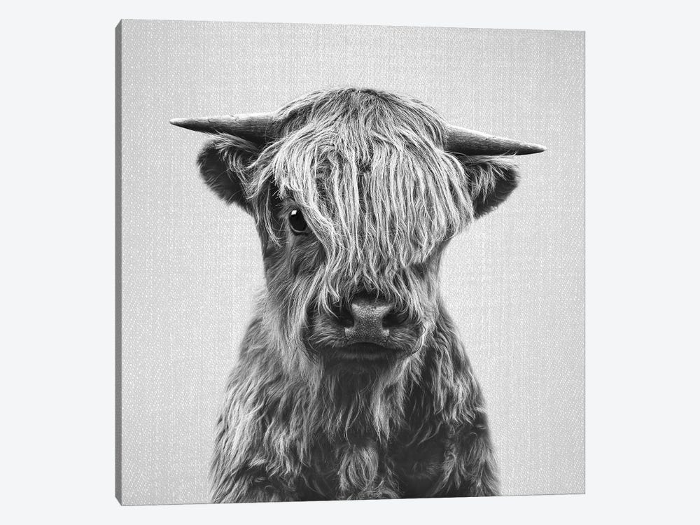 Highland Calf In Black & White by Gal Design 1-piece Canvas Artwork