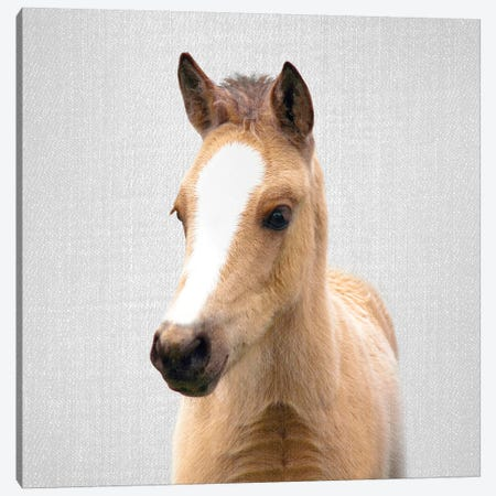 Baby Horse Canvas Print #GAD7} by Gal Design Canvas Artwork