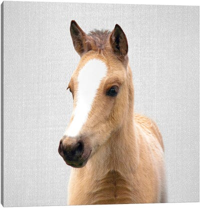 Baby Horse Canvas Art Print